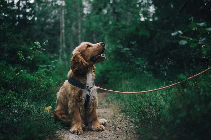 Meilleures idées d'affaires Promenade du chien