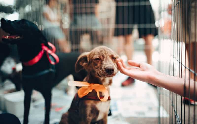 Meilleures idées d'affaires Toilettage d'animaux de compagnie